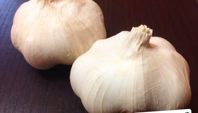 Come rendere l'aglio digeribile