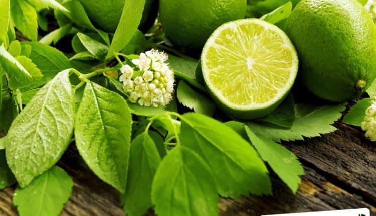 Per conservare i limoni freschi