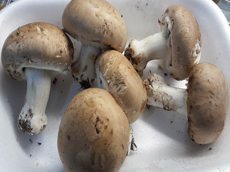 Funghi Cremini