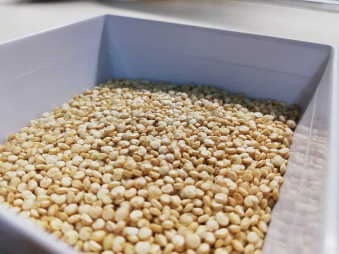 Come Cucinare la Quinoa